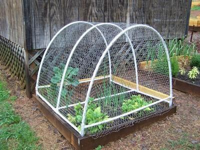 Garden Fencing .. Maybe Do Something Like This With Netting Over The Top To Keep  Birds And Squirrels Out...if The Cat Doesnu0027t Earn His Keep Anyway.