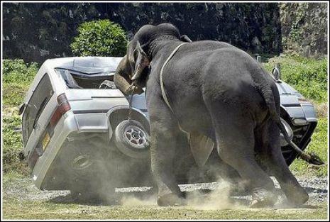Top 20 Most Weirdest Car Accidents! http://ibeebz.com