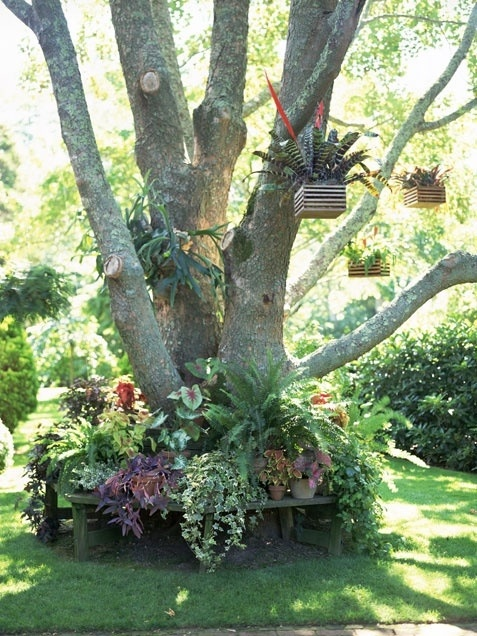 Landscaping Ideas Around Oak Trees : Flower bed around a tree laura