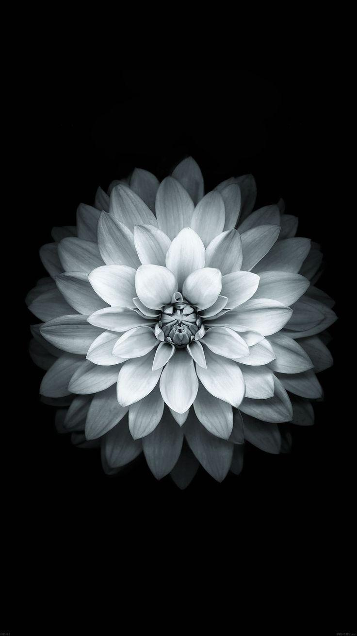картинки на аву для айфона цветы представьте сколько