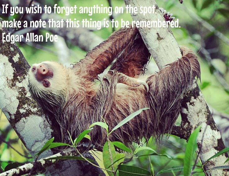 Pin by Galleon Pontus on Tshirt + Quote a Day Sloth