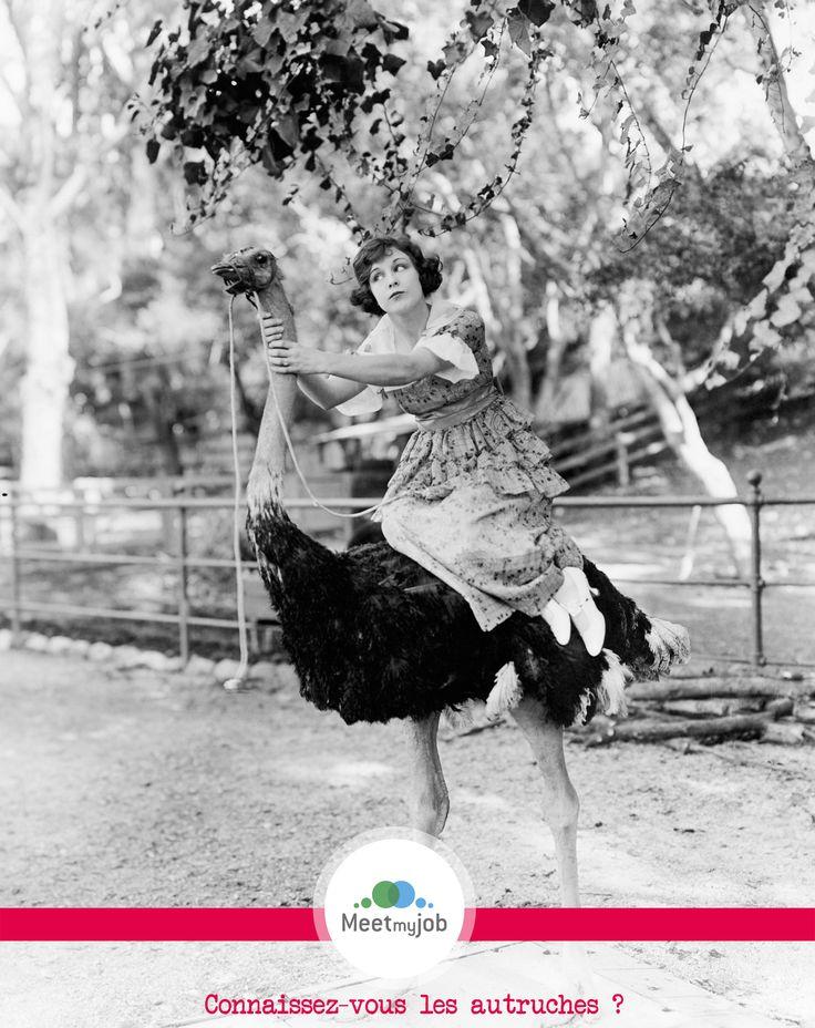 Connaissez-vous les #autruches ? http://bit.ly/1us1y4l