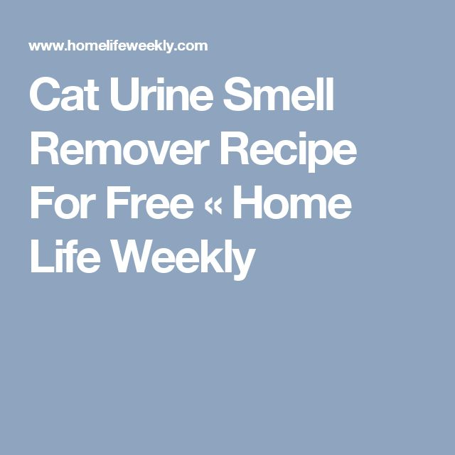 Cat Urine Smell Remover Recipe For Free « Home Life Weekly
