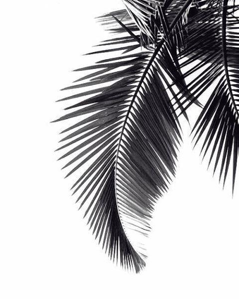 Palm tree leaf silhouette