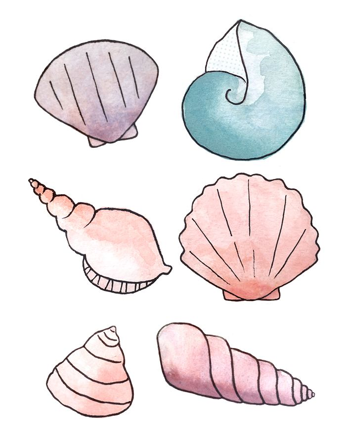 Seashells - Tintin Illustrations #illustration