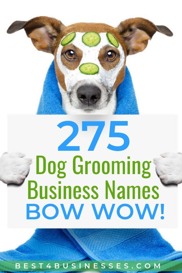 275 Creative Dog Grooming Business Names Bow Wow Dog Grooming Business Pet Grooming Business Dog Grooming