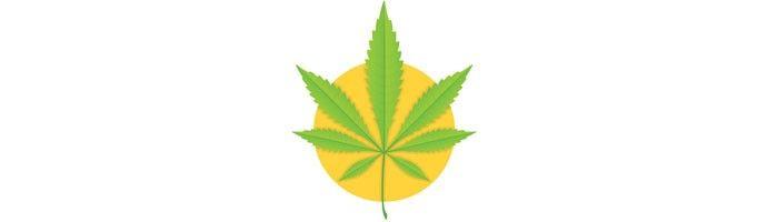 Estudo foi realizado nos 23 estados dos EUA que liberaram a Cannabis para uso medicinal