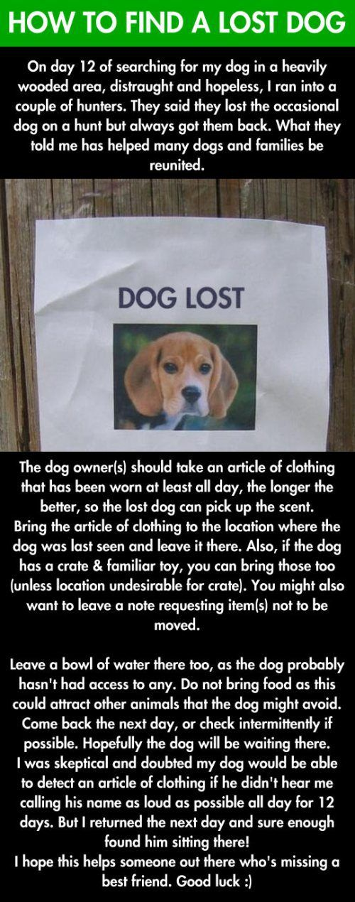 Tip to help recover a lost dog.