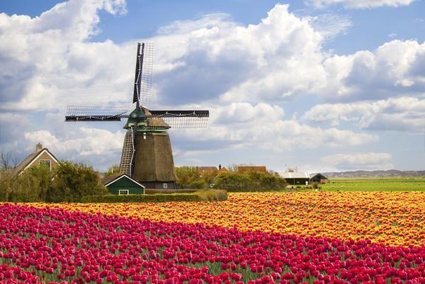 Cómo cuidar tulipanes - 6 pasos - unComo