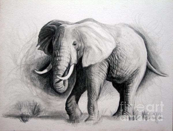 109 best Elephants: Drawings images on Pinterest