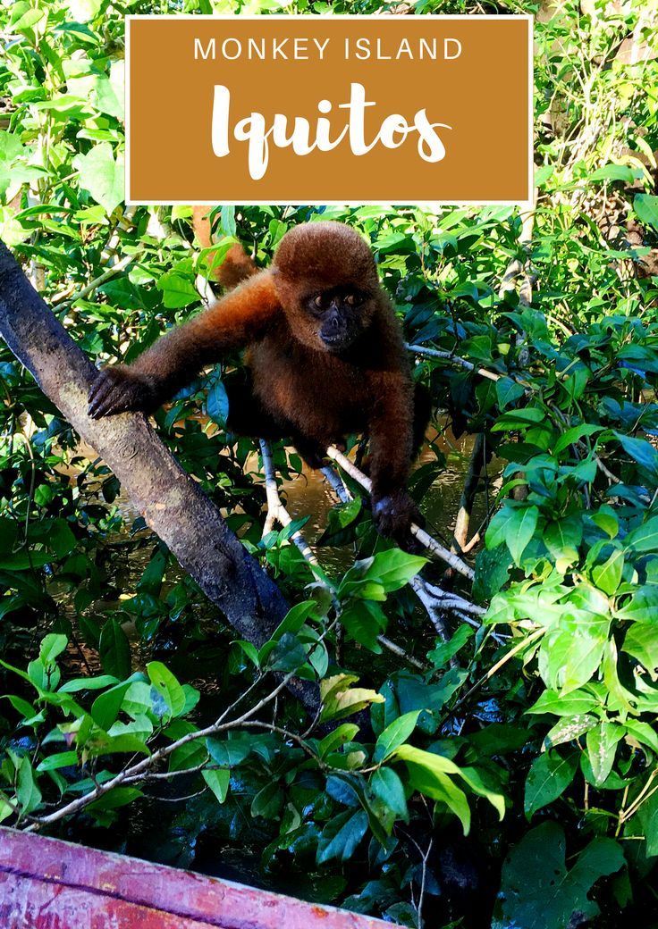 Monkey Island, one of the many places to visit in Iquitos, Peru. Things to do in Iquitos and more, all in this Iquitos travel guide.