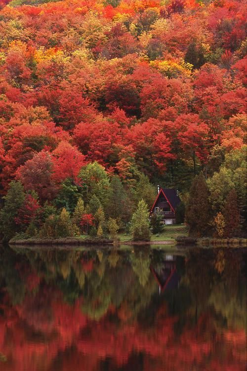 Now that's a cabin in the woods that I'd want to spend the night, or forever - Autumn Lake, Quebec, Canada... #travel #wanderlust