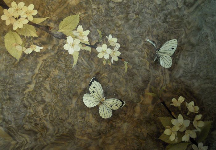 """Unfinished marquetry. Cherry blossoms and butterflies marquetry for a box. Made with """"Shaw Riley"""" bespoke cabinet makers in UK. www.shaw-riley.co..."""