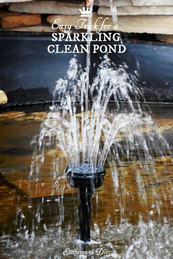 Murky pond water? This simple trick is a chemical-free way to clear up murky water in small garden ponds within hours and keep it that way.