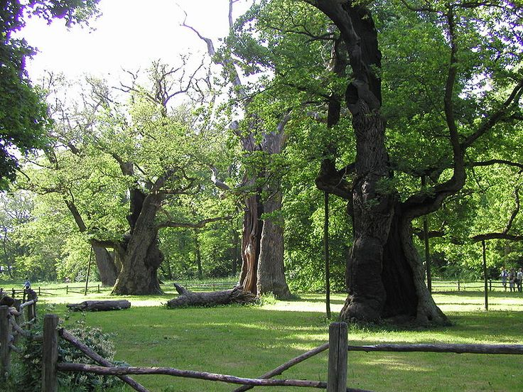 The Oaks of Rogalin - thousand-year-old trees in Rogalin, Greater Poland, named after the three mythic founders of the Slavic nations.    http://en.wikipedia.org/wiki/Lech,_Czech_and_Rus#Oaks_of_Rogalin
