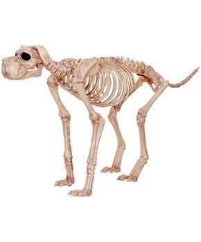 PartyBell.com - Large Skeleton Dog