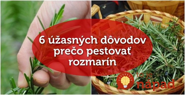 Rozmarín je jednou znajužitočnejších byliniek, ktoré vo svojich domácnostiach pestuje čím ďalej tým viac ľudí. Jeho vôňa uvoľňuje, lieči apovzbudzuje. V Stredomorí, odkiaľ táto bylinka pochádza, sa traduje, že rozmarín nesmie chýbať vžiadnej domácnosti. Okrem krásnej vône tamojší ľudia veria, že prináša do domov pokoj, lásku adobrú náladu. XY skvelých spôsobov, ako využiť rozmarín 1....