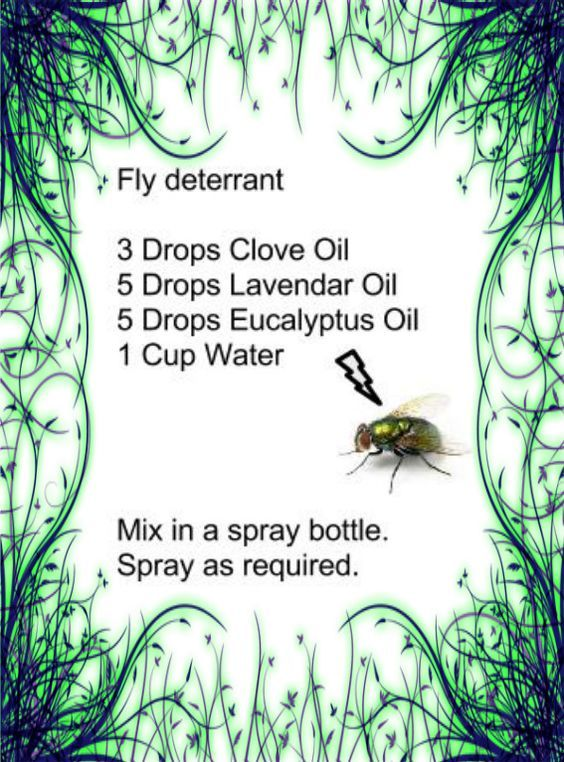 how to get rid of flys in chicken coop