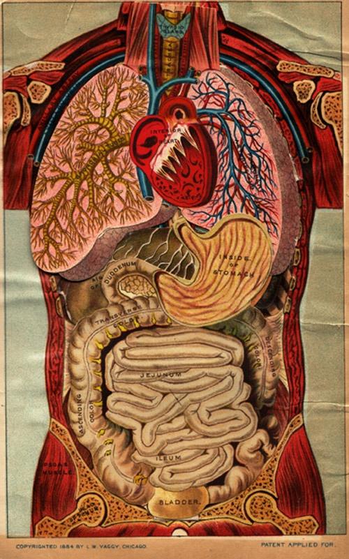 Anatomy: The Human Body, Anatomy Art, Heart Art, Human Anatomy, Pop Up Books, Anatomical Illustrations, Photo, 1884, Register Nur