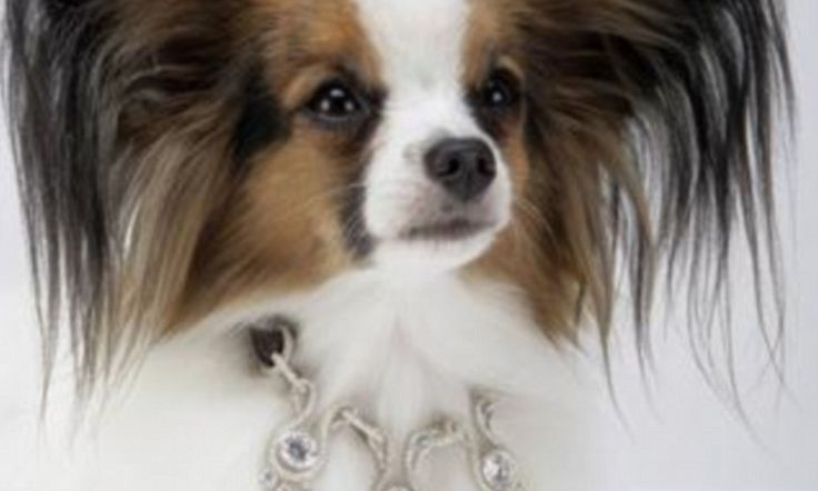For the ultimate in pet pampering, these collars go from $150,000 to a staggering $3.2million and feature carat after carat of decadence for your canine companion.