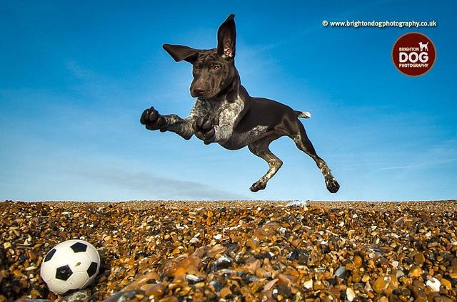 Brighton Dog Photography - Coco by brightondogphotography, via Flickr