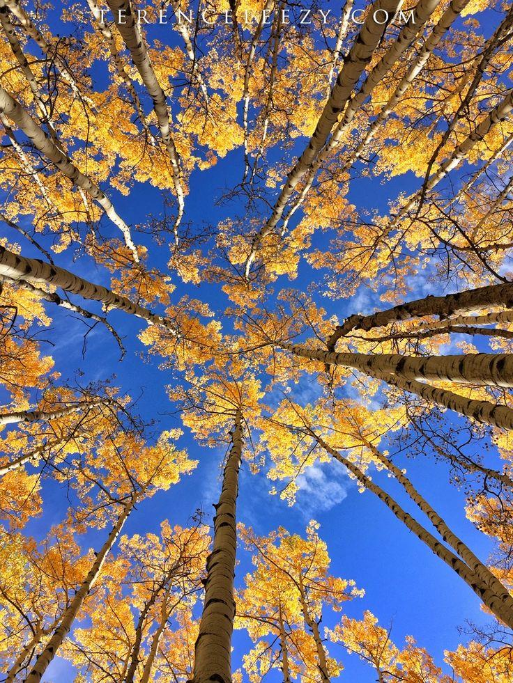 iPhone 6 Plus - herfstkleuren op zijn mooist!