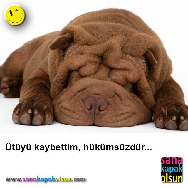 Bu soğuk havada en iyi iyisi böyle yatmak :)  #sanakapakolsun www.sanakapakolsun.com