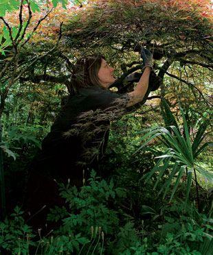 Pruning Japanese Maples - Fine Gardening Article