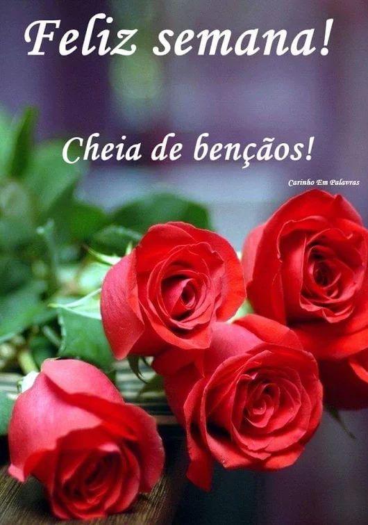 ✿⊱❥ Feliz Semana!  #Pétalas Soltas