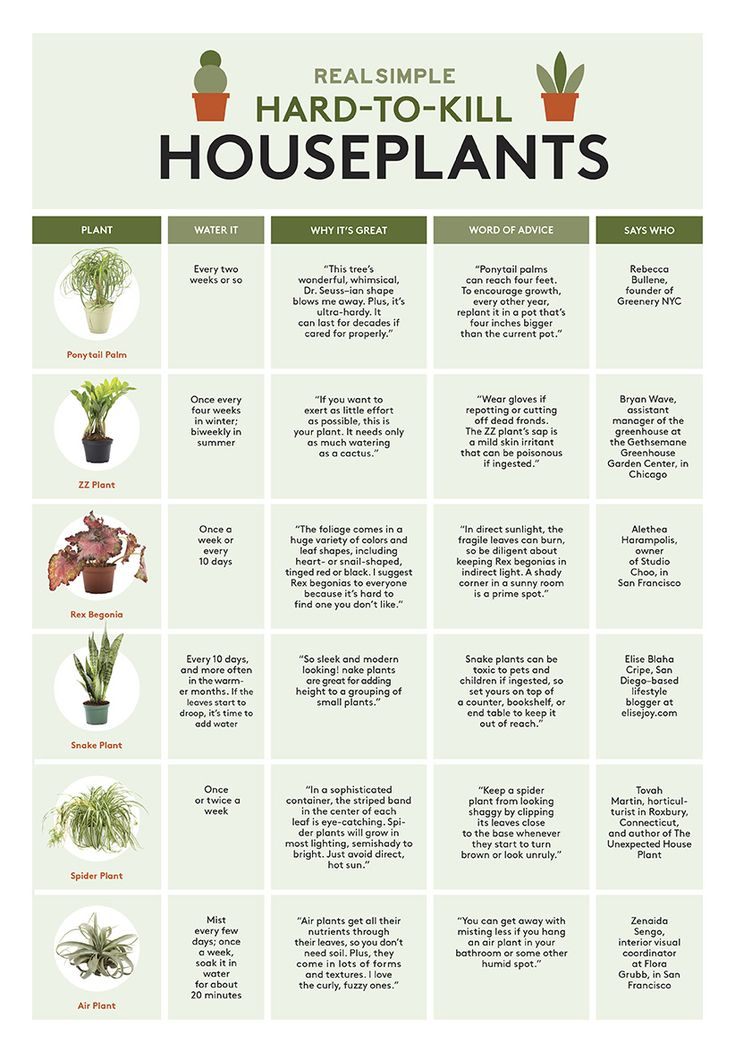 Houseplants chart | They give so much (beauty) yet ask for so little (water, on occasion). Six (selfless) picks from the pros.