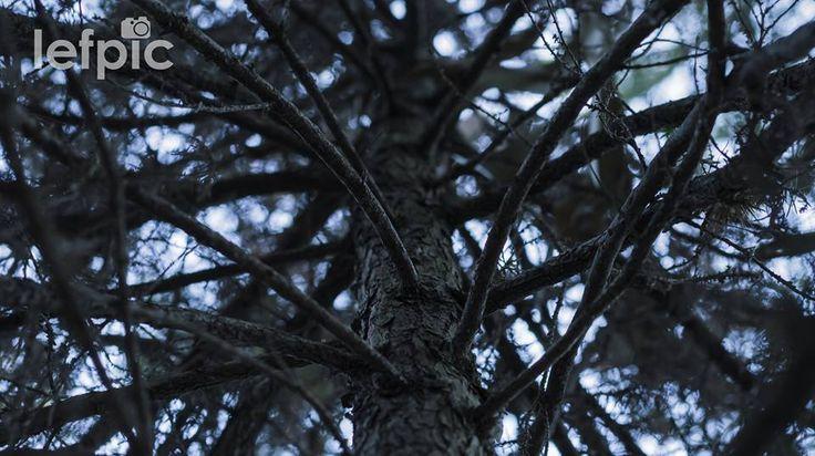• Floresta Negra - Reprodução de uma árvore com galhos secos no cair da noite, fenômeno semelhante ao que ocorre na vegetação do sudoeste da Alemanha, no estado de Baden-Württemberg. Ideal para projetos relacionados à natureza, mudanças climáticas e/ou particularidades de uma determinada região. 📷 by @leandrof87 Download da imagem no #iStock: https://www.istockphoto.com/…/dry-branches-of-a-tree-gm5967… #forest #black #darkness #tree #garden #environment #nature #ecology #beauty #photo #