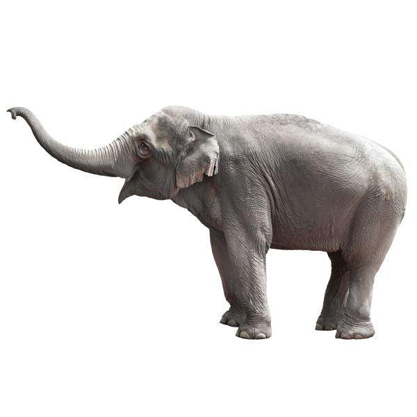 KEK Amsterdam Safari Friends Elephant XL Wandsticker  https://www.flinders.de/kek-amsterdam-safari-friends-elephant-xl-wandsticker