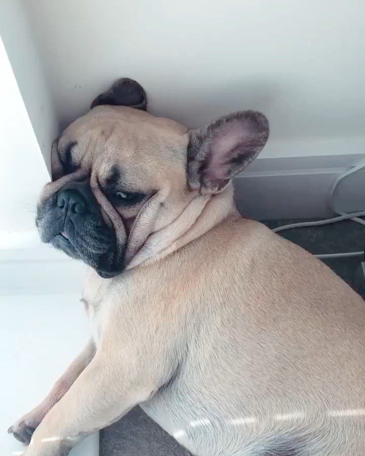 I Do Not Care About Your White Walls Mummy Frenchbulldog