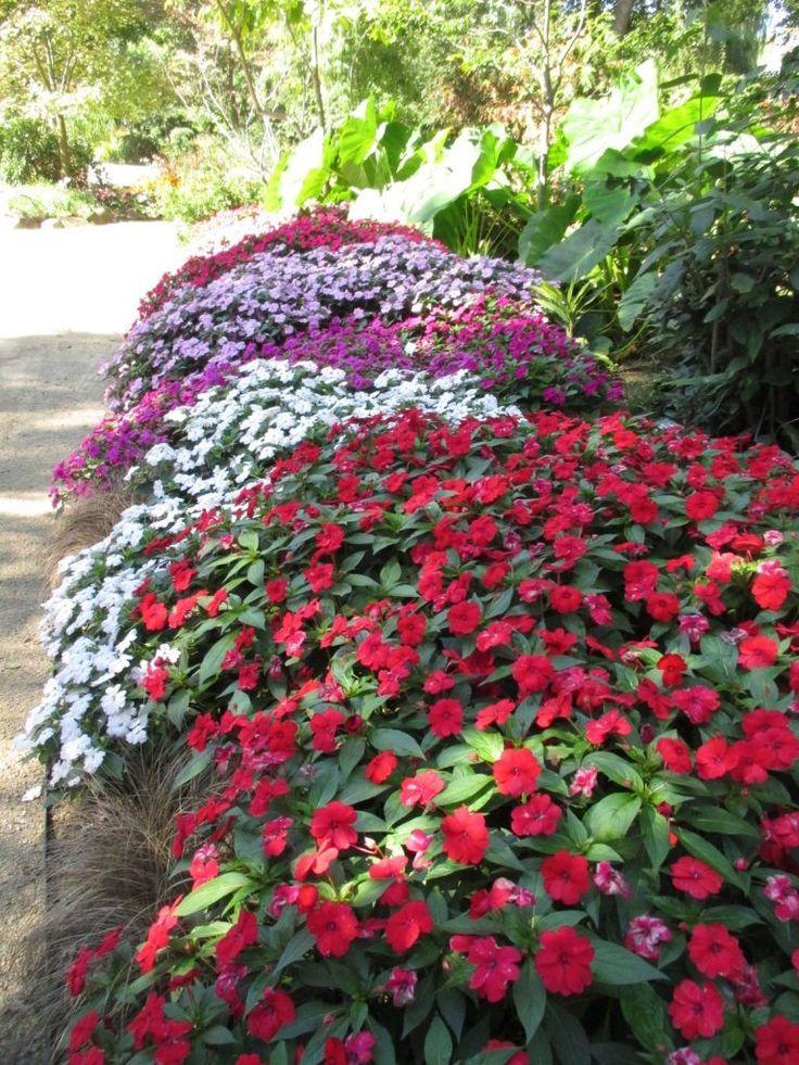 воздушные потоки бальзамин садовый выращивание и уход фото переложить сито обдать