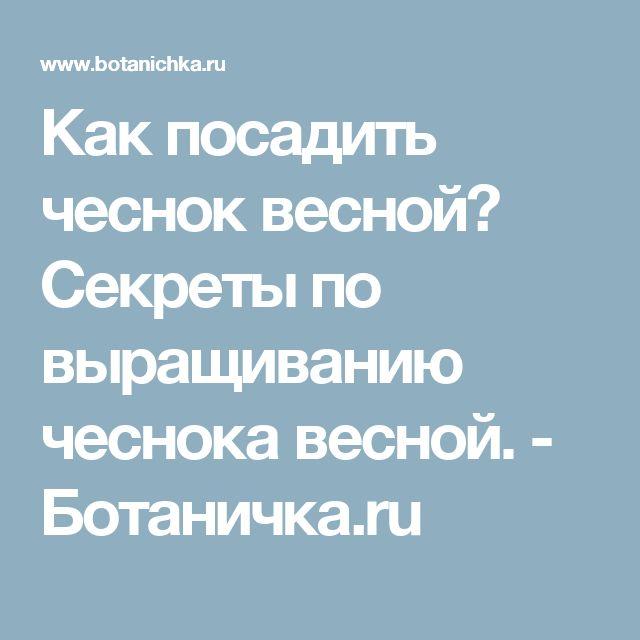 Как посадить чеснок весной? Секреты по выращиванию чеснока весной. - Ботаничка.ru
