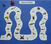 Activities that can be used with bug specimens. Bug themed activities.