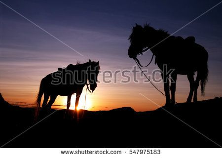 Silhouette of two horses in the morning