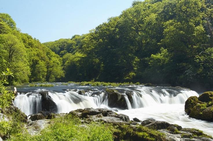 Cenarth Falls in Pembrokeshire
