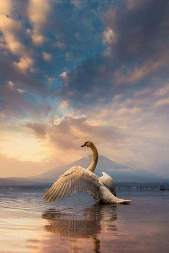On Swan Bay....