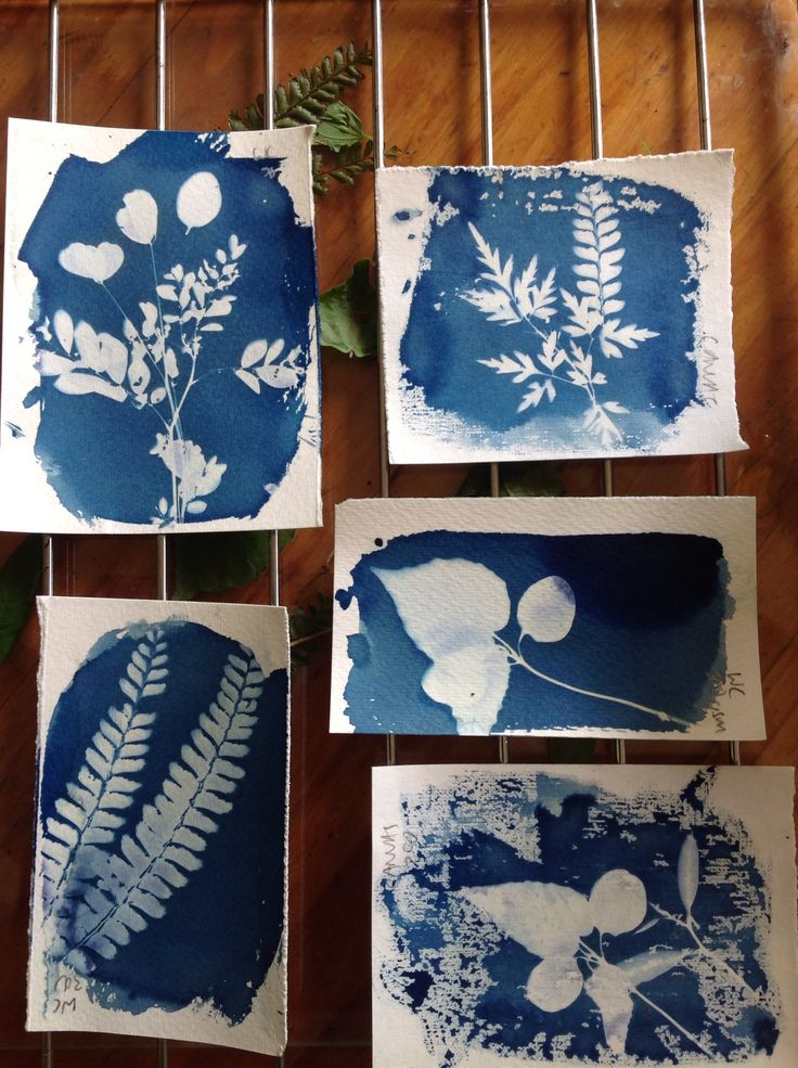 Cyanotypes batch 2