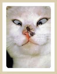 웃긴 동물 - Google 검색  고양이코에 벌레