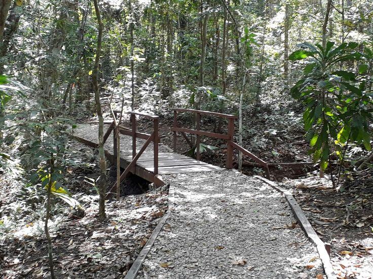 Puente del sendero Los Robles del parque Metropolitano, Reserva Forestal en ciudad de Panamá.