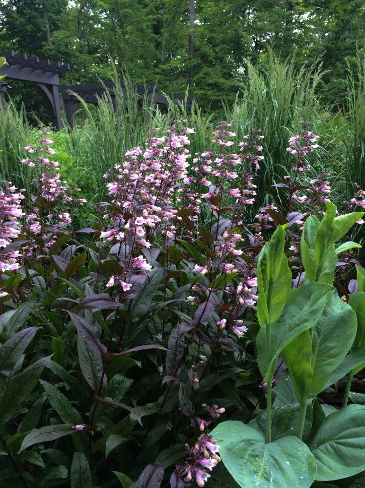 Detrás de Paisaje y Jardinería del Gardenista Jardín Diseño- de McCullough, Pensar fuera del Boj