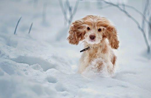 Ubranka dla psów, czyli jak chronić pupila przed zimnem
