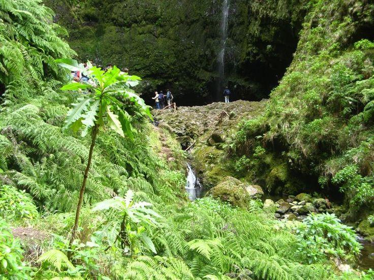 Vandretur langs den spektakulære levada på Madeira. Snap nogle billeder af brusende vandfald, frodige natur og smukke landskaber. Nyd en picnic frokost nær et vandfald inden turen går tilbage.