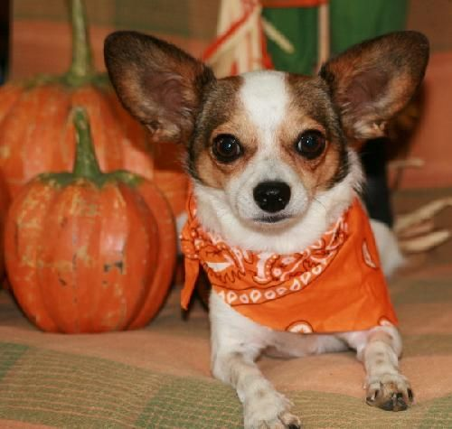 It's fall and the rescues are getting cuter :)