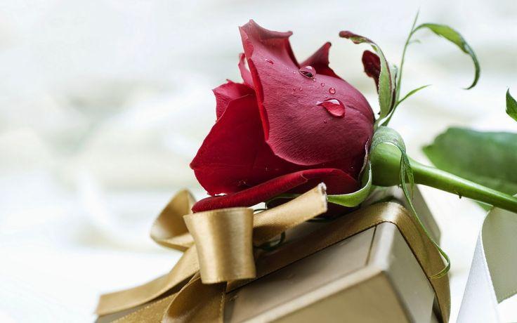 Imágenes de flores románticas de amor para compartir gratis