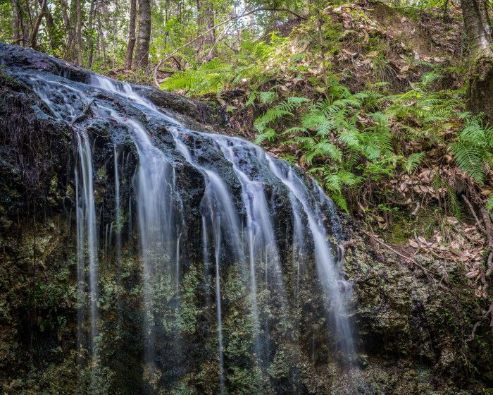 16 Out Of This World Hiking Spots in Florida - - - 16. Falling Waters State Park