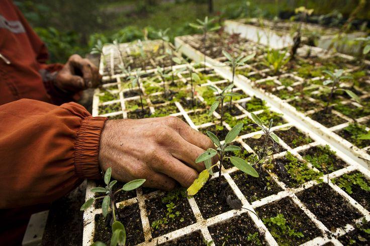 A cada visitante, plantamos uma muda de árvore nativa da Mata Atlântica. E você também pode plantar! Dessa forma, ajudamos a compensar nossa pegada de carbono e a natureza agradece.