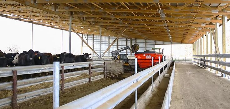Use Indoor Feedlot Facility For Cattle Confinement Size